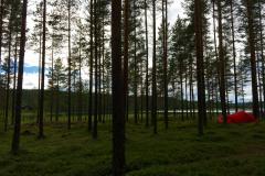 Telt-i-skog-scaled